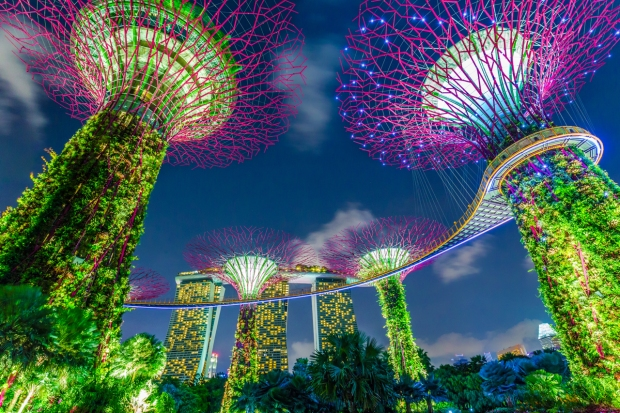 singapore239